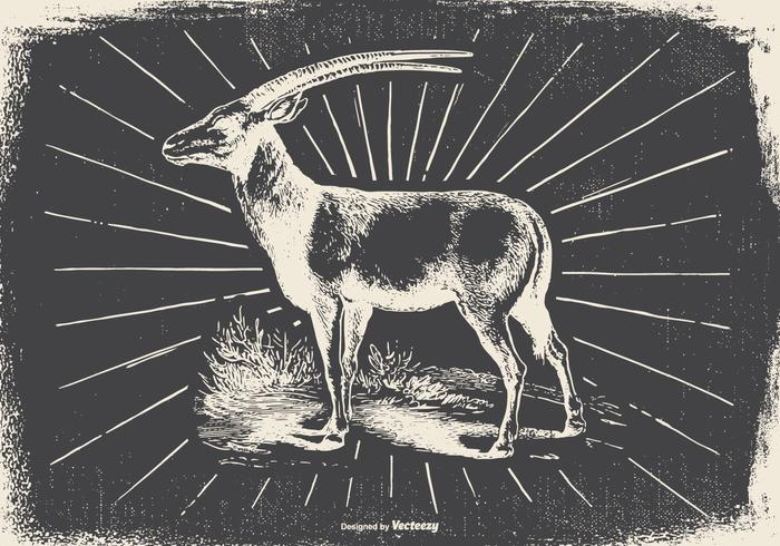 Vintage-Antilope Illustration