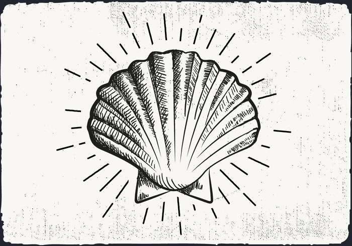 Free Hand Drawn Shell Background