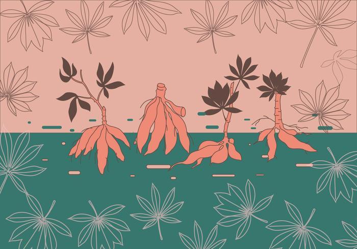 Cassava växt Vector
