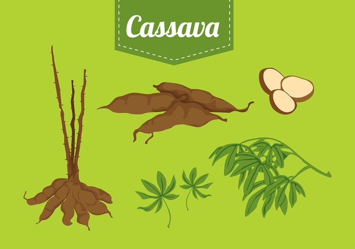 Cassava Set Free Vector