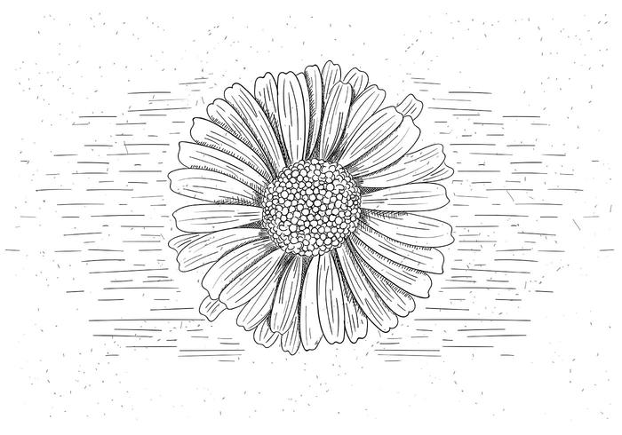 Gratis Vector Flower Illustration