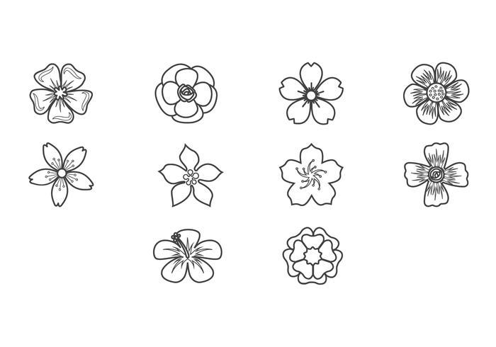 Plum Blossom Icon Vector