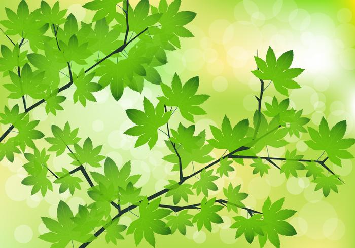 Green Maple Leaves Vector