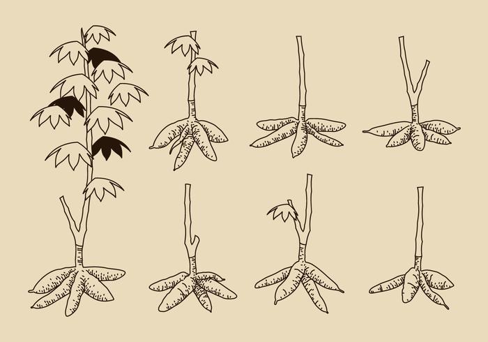 Dibujado mano del vector del árbol de la mandioca gratuito