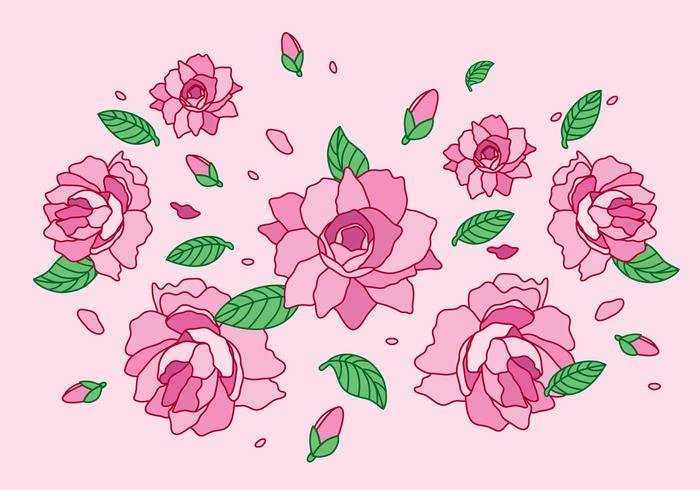 Camellia Flower vector