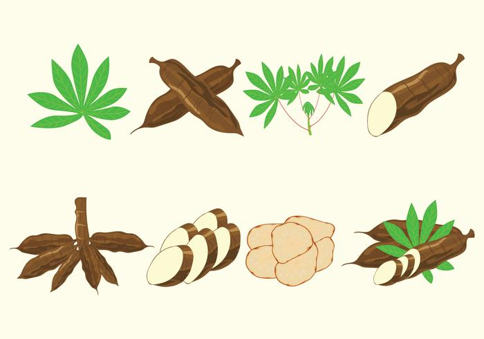 Cassava Vectors Icon