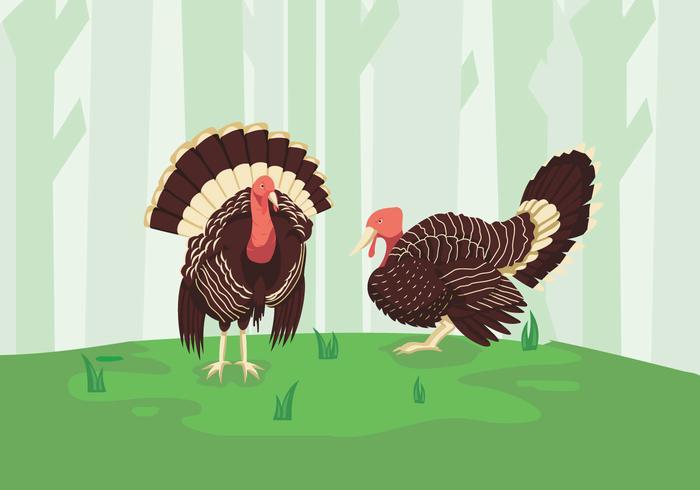 Wild turkey green forest illustration