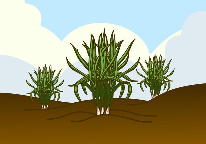 Wild Lemongrass Plant Vector
