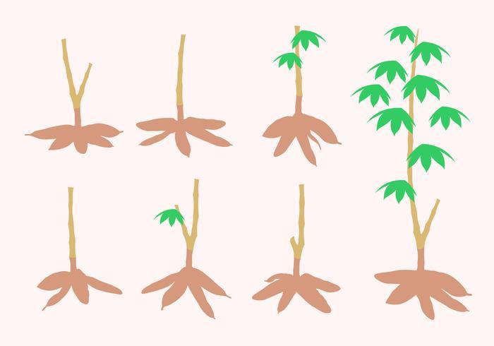 Vettore gratis albero di manioca