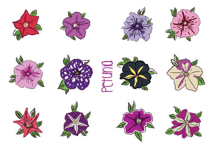 Divers Petunia fleur Vecteurs vecteur