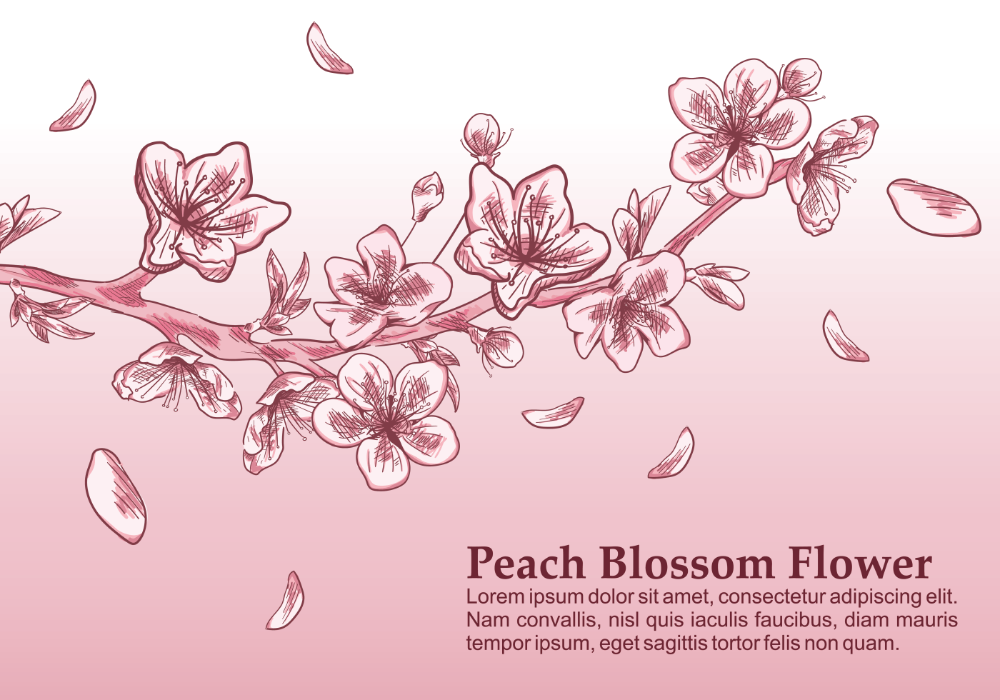 peach blossom vector illustration download free vector