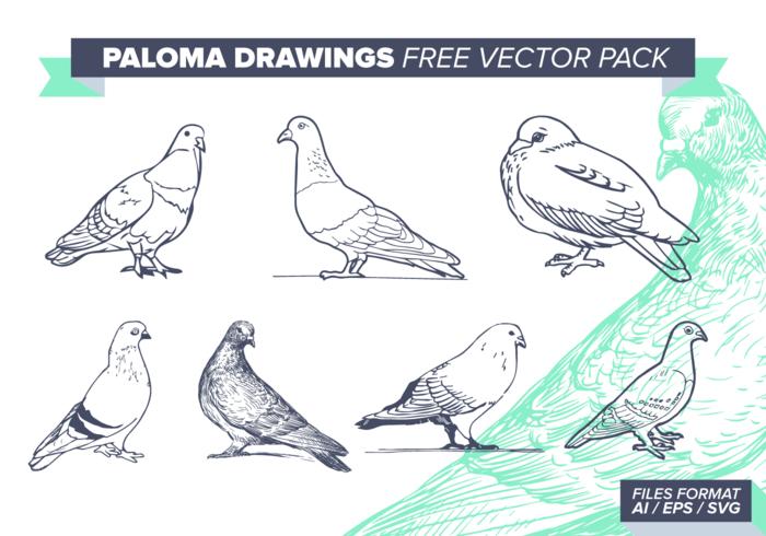 Paloma Drawings Free Vector Pack