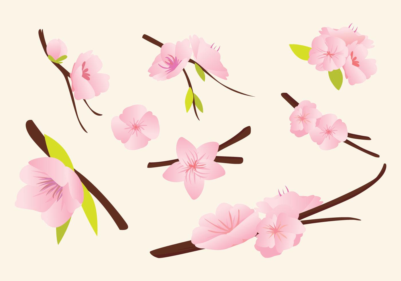 Peach blossom vector download free vector art stock for Peach tree designs