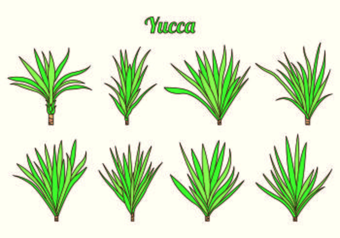 Set Of Yucca Vectors