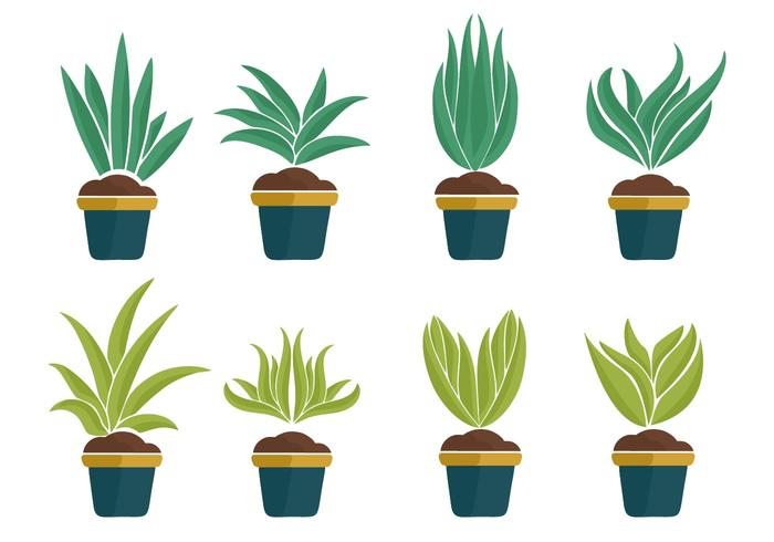 Free Yucca Plant Icons Vector