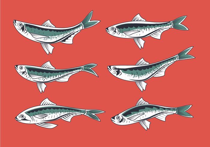 Fresh Sardine Hand Drawn Style Vectors