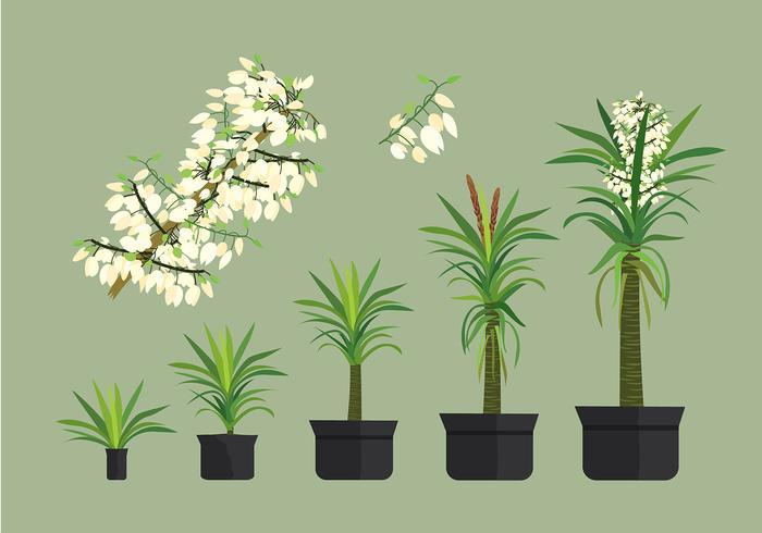 Free Yucca Plant Vectors - Download Free Vectors, Clipart ...