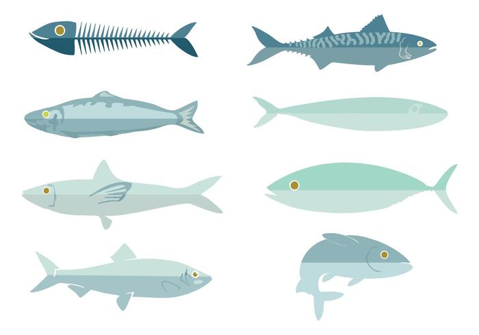 Free Fresh Fish Sardine Vector