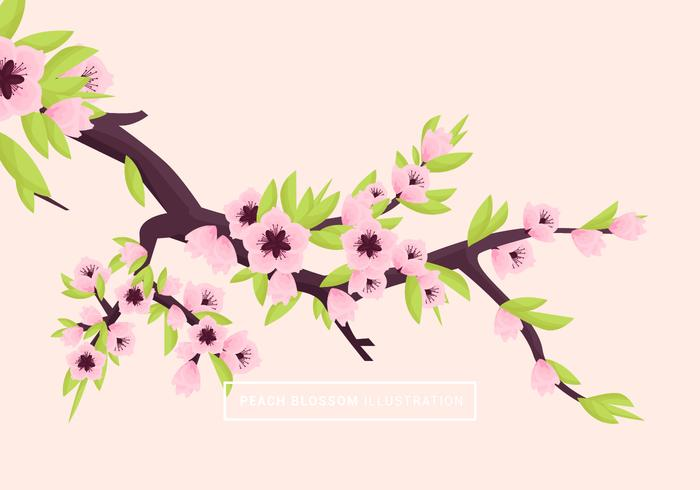 Peach Blossom Vector Illustration