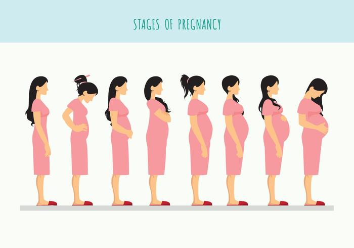 Pregnant Beautiful Woman Vector