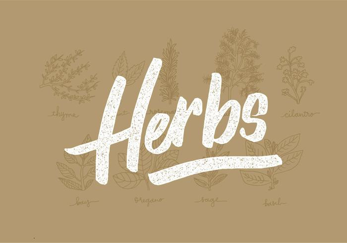 Line Drawing Vector Graphics : Fresh herbs line drawings download free vector art stock graphics