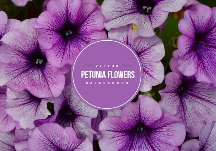 Petunia Vector Background
