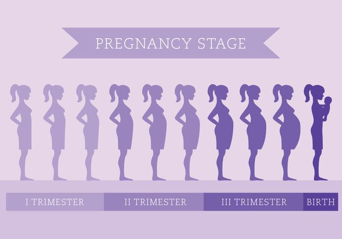 Pregnancy Stage