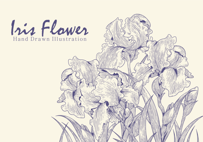 Free Hand Drawn Iris Flower Vectors