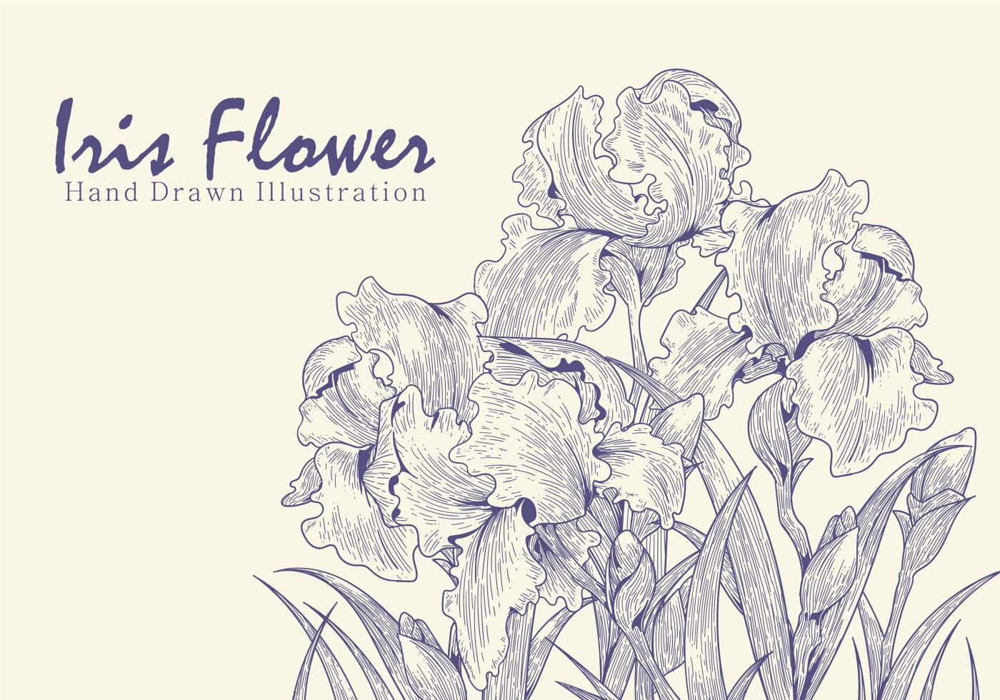 Free hand drawn iris flower vectors download free vector art free hand drawn iris flower vectors download free vector art stock graphics images izmirmasajfo