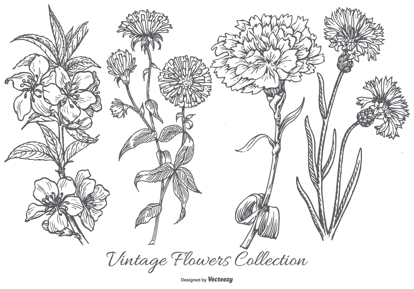 Vintage Flower Collection Download Free Vector Art Stock Graphics
