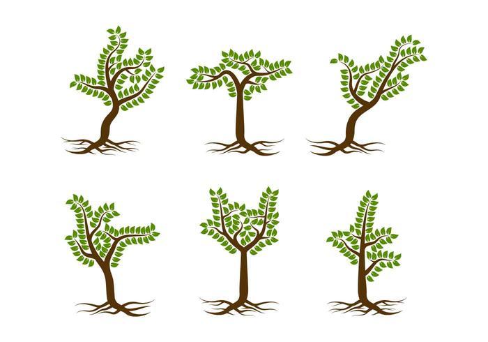 Árbol único libre con raíces Vectores