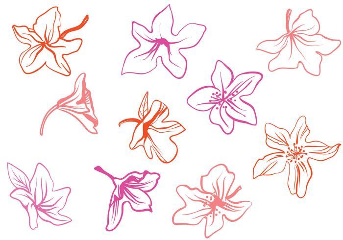 Vecteurs Rhododendron libres
