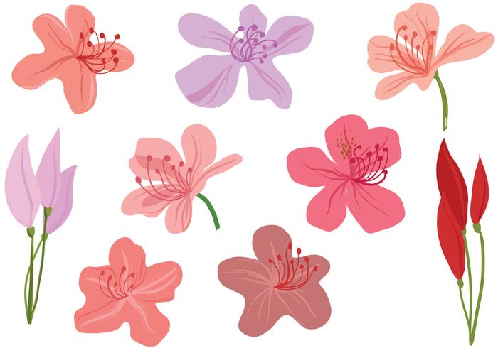 Free Rhododendron Flowers Vectors