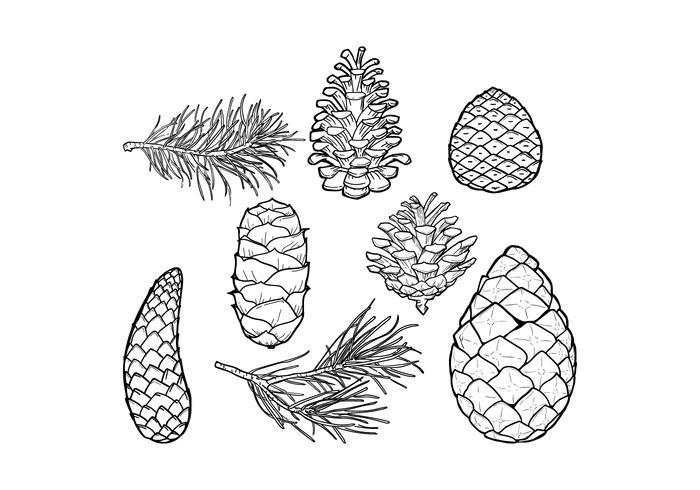 Conos del pino y de la hoja del vector