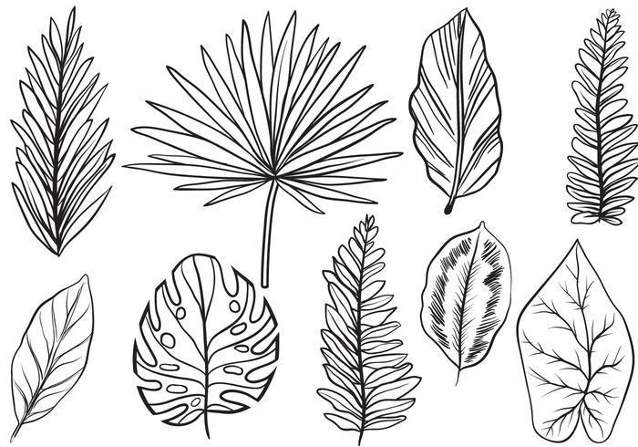 Free Vintage Exotic Leaves Vectors