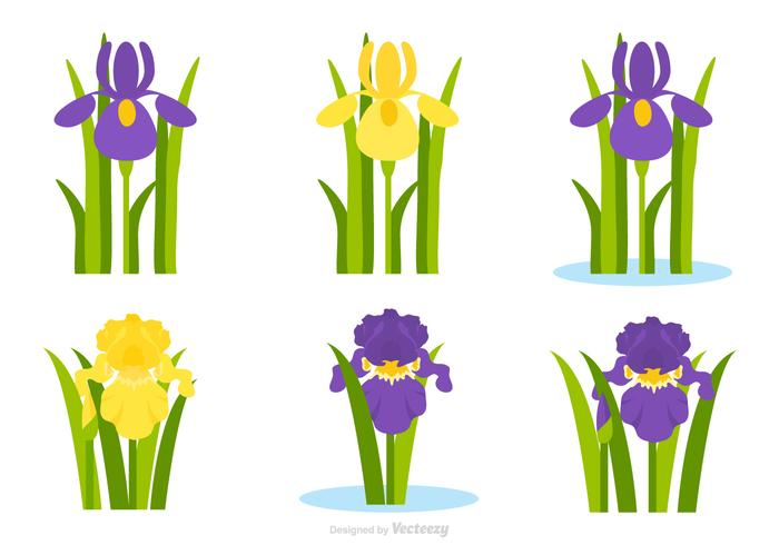 Flat Purple And Yellow Iris Flower Vector Set