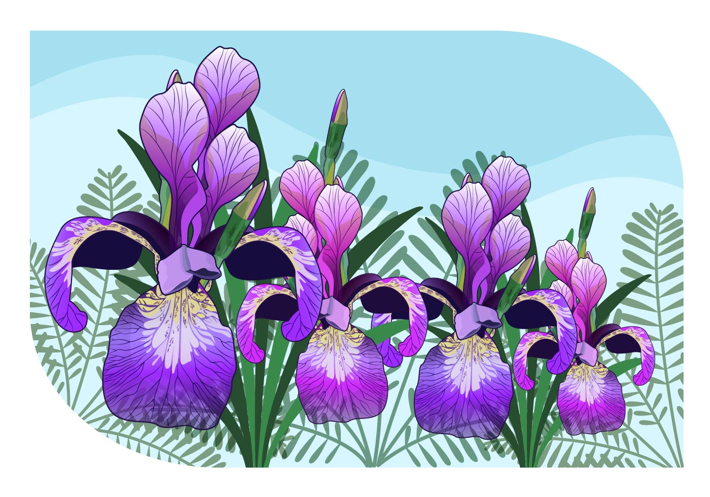 Iris flower free vector art 10625 free downloads izmirmasajfo Image collections