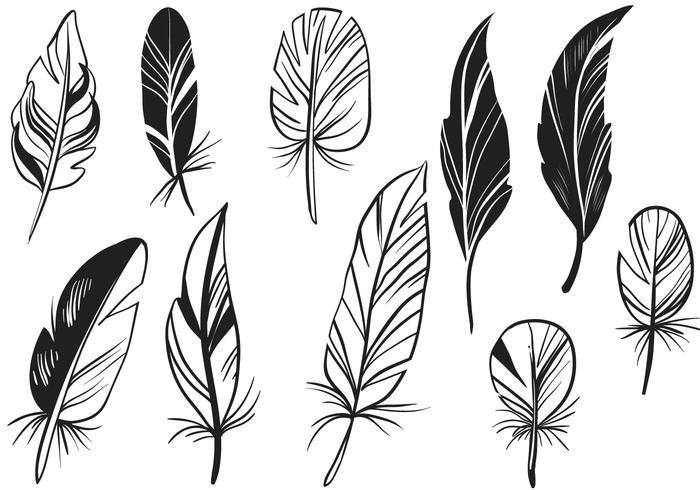 Gratis Feathers Vectoren
