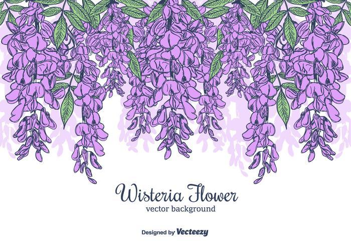 Hand Drawn Wisteria Blume Vektor Hintergrund