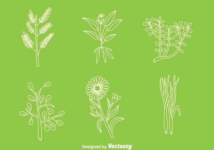 Hand Getrokken Kruidengeneeskunde Plant vectoren