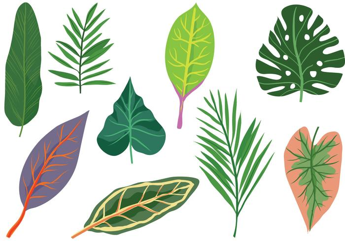 Gratis Exotic Leaves Vectors