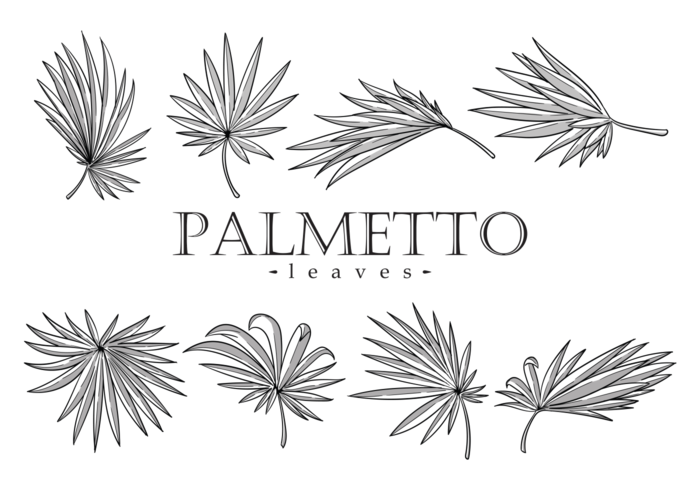 Palmetto Leaves Vector