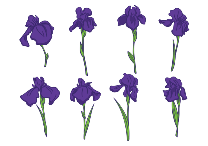 hand drawn iris flowers vector  download free vector art, stock, Beautiful flower