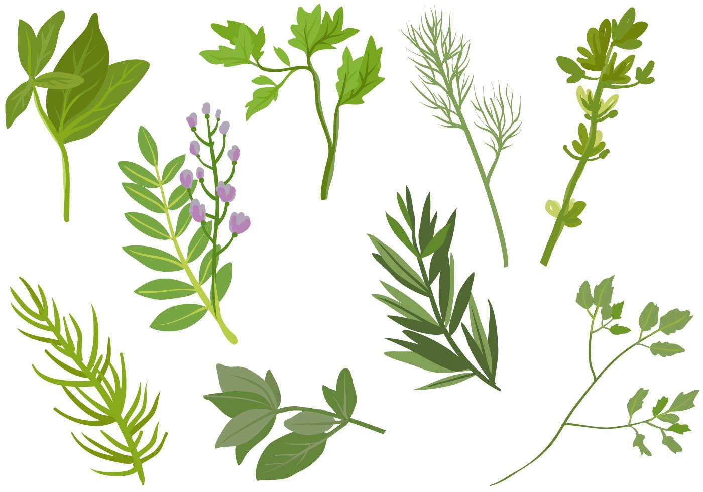Herbs Vectors - Down