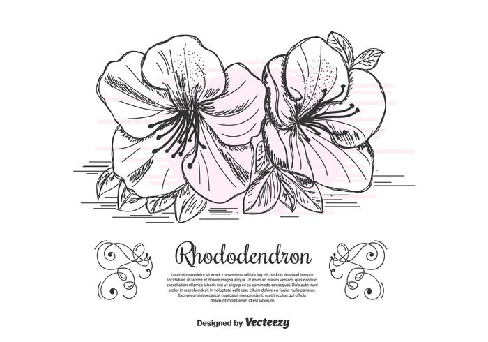 Rhododendron Vector Background