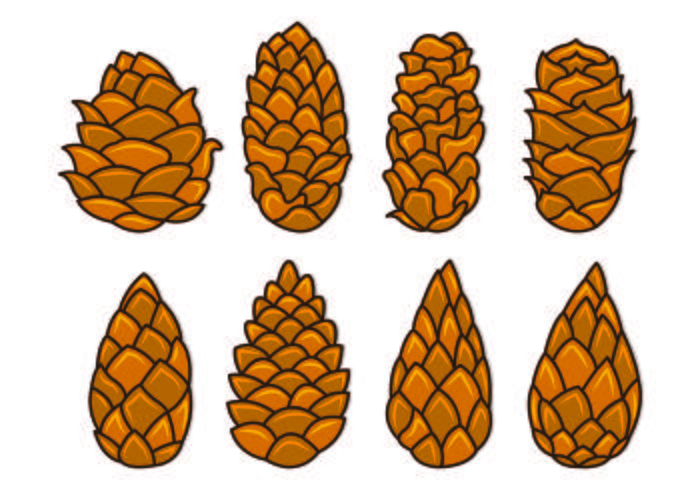 Set Of Pine Cones Vectors