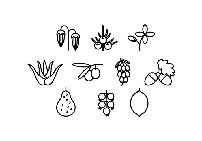 Free Medical Herbs Line Icon Vector