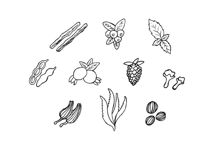 Free Herbs For Medicine In Hand Drawn Vector