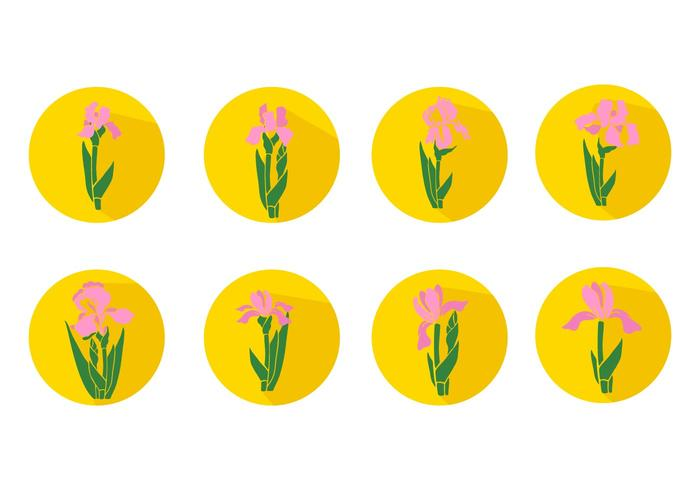 Iris Flower Icons Vector