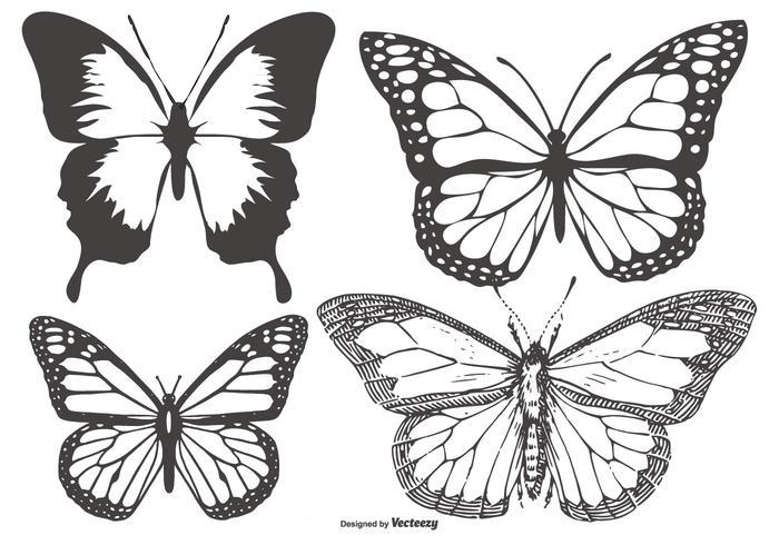 Coleção da borboleta do vintage / Mariposa